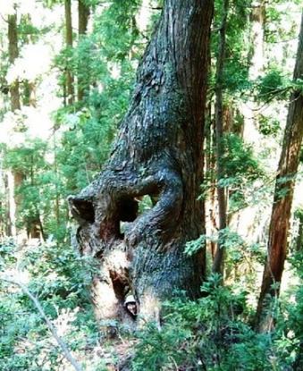 tree-ikaru.jpg